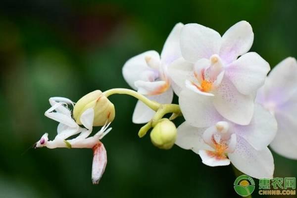 花中君子后面是什么花?花中君子的寓意是什么?