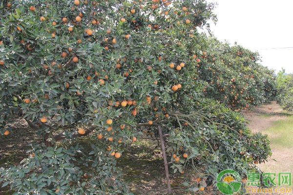3月可以种什么水果?三月份果树种植指南